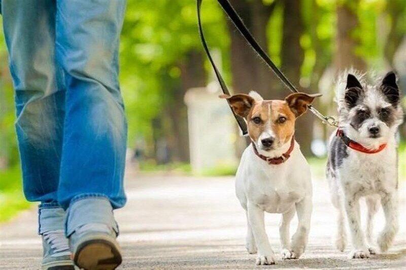 افزایش نگرانی در آمریکا با ابتلای نخستین سگ در این کشور به کرونا